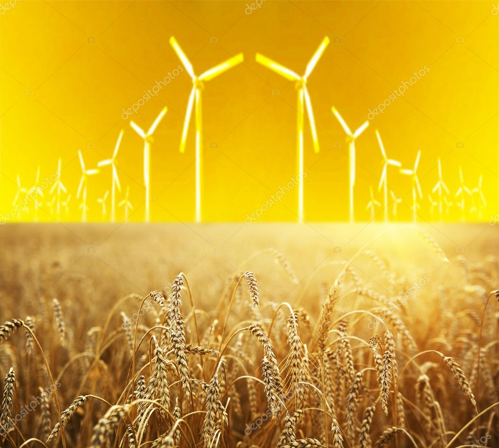 wheat and Wind generators turbines