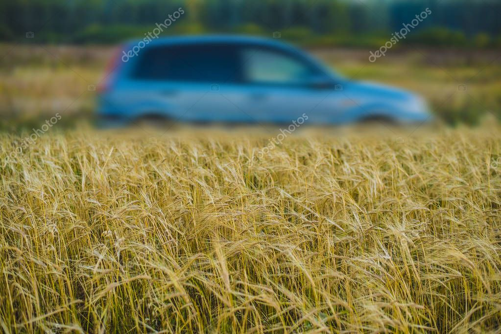 Car On Wheat Field