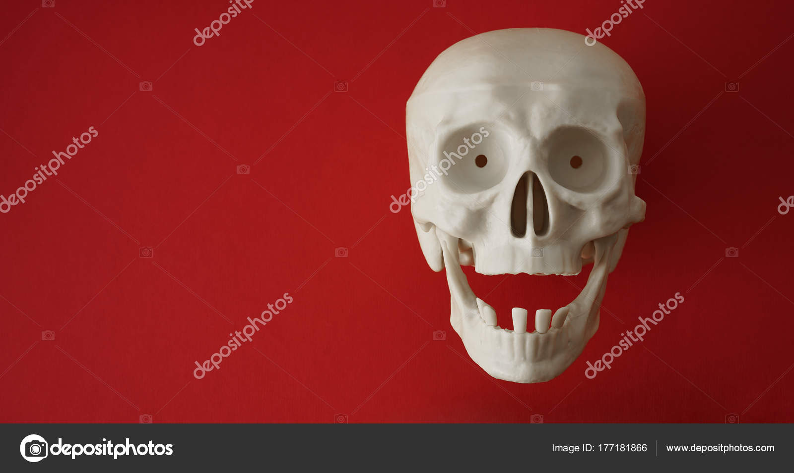 Anatomía Cuerpo Humano Cráneo Con Los Dientes Sistema Esquelético ...