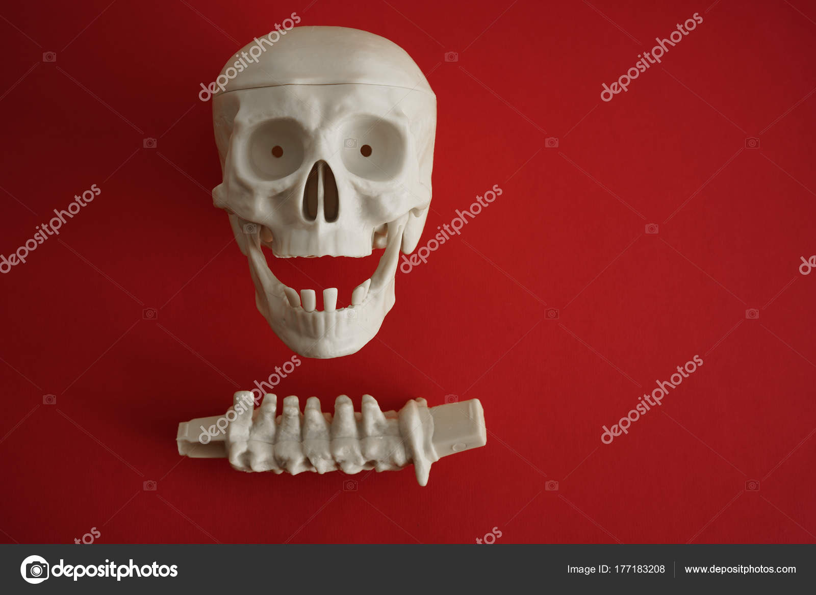 Anatomy Body Human Skull Teeth And Spine Skeletal System Isola