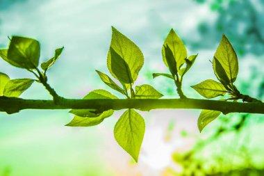 """Картина, постер, плакат, фотообои """"красивые весенние зеленые листья. природа постеры печать картины модульные города"""", артикул 191825086"""