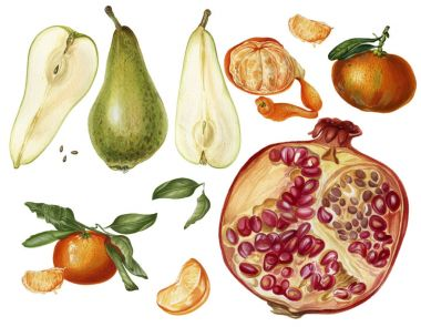 Set of fruits with  green pears, orange mandarins and pomegranate. Hand drawn illustrations.