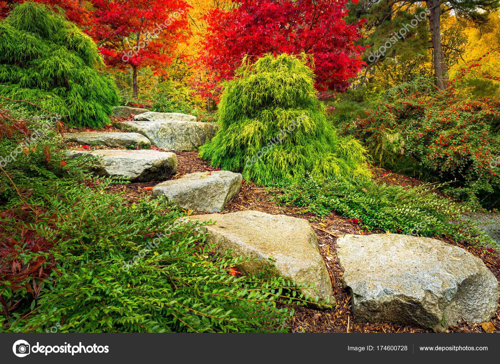 trittsteine führen richtung rote japanische ahornbäume kubota garten