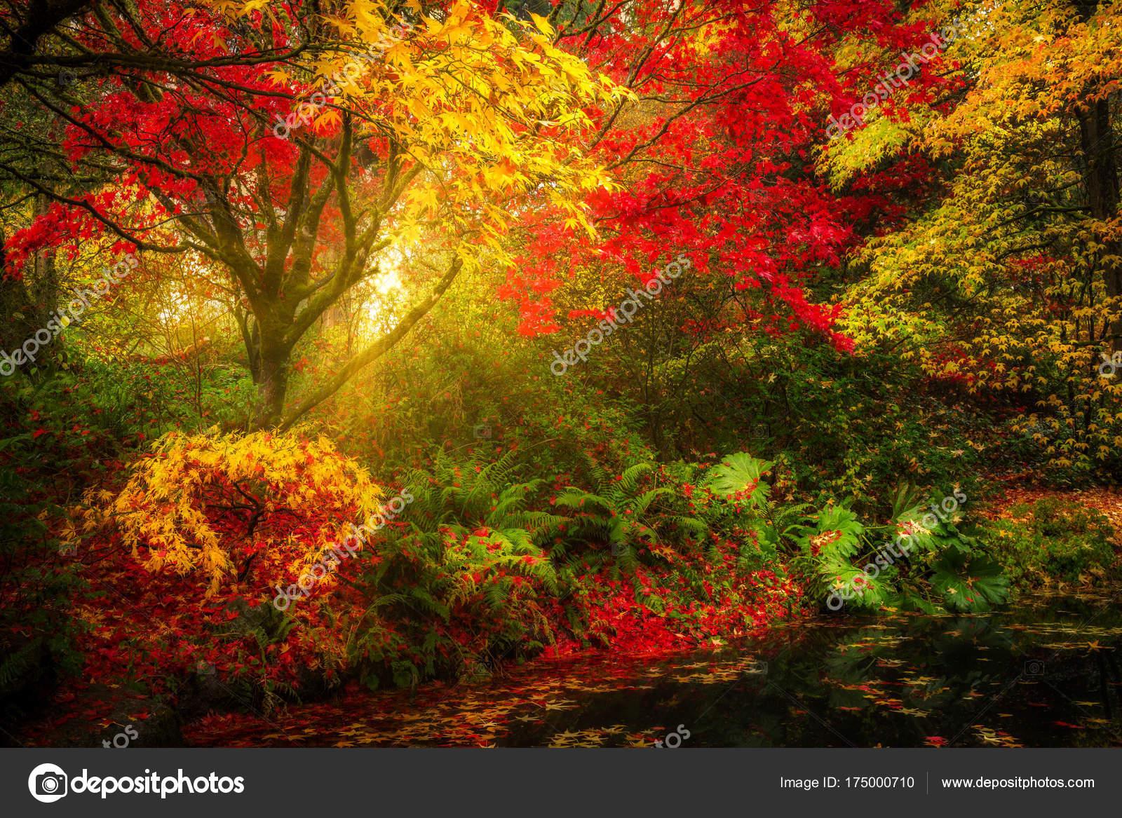Dreamy Fall Foliage Landscape Seattle Washington Park Arboretum ...