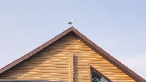 Na střeše domu stojí velký bílý čáp.