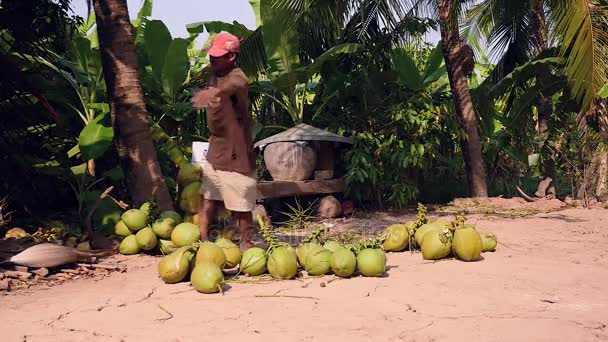 Man carrying coconuts