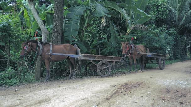 Několik prázdných koně vozíky čekání na straně silnice venkovské cesty