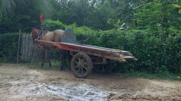 Košík prázdný koně čekání na straně silnice venkovské cesty