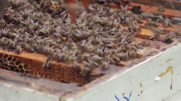 Zblízka včelaře, přičemž rám z úlu