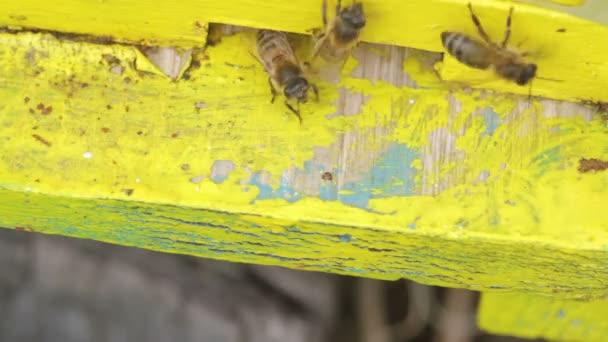 Makro des Eingangs des gelben Bienenstocks mit ein- und ausfliegenden Honigbienen
