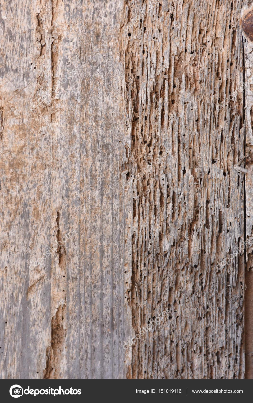 termite de bois free traitement des bois termites with termite de bois fond texture termites. Black Bedroom Furniture Sets. Home Design Ideas
