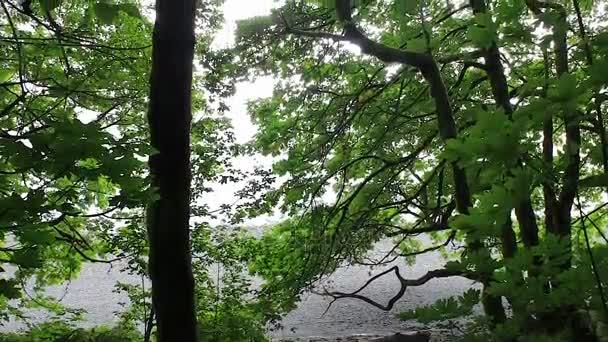 pohled z pobřežní linie nahoru lesem