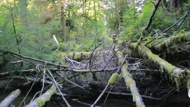 posouvání přes web padlých stromů