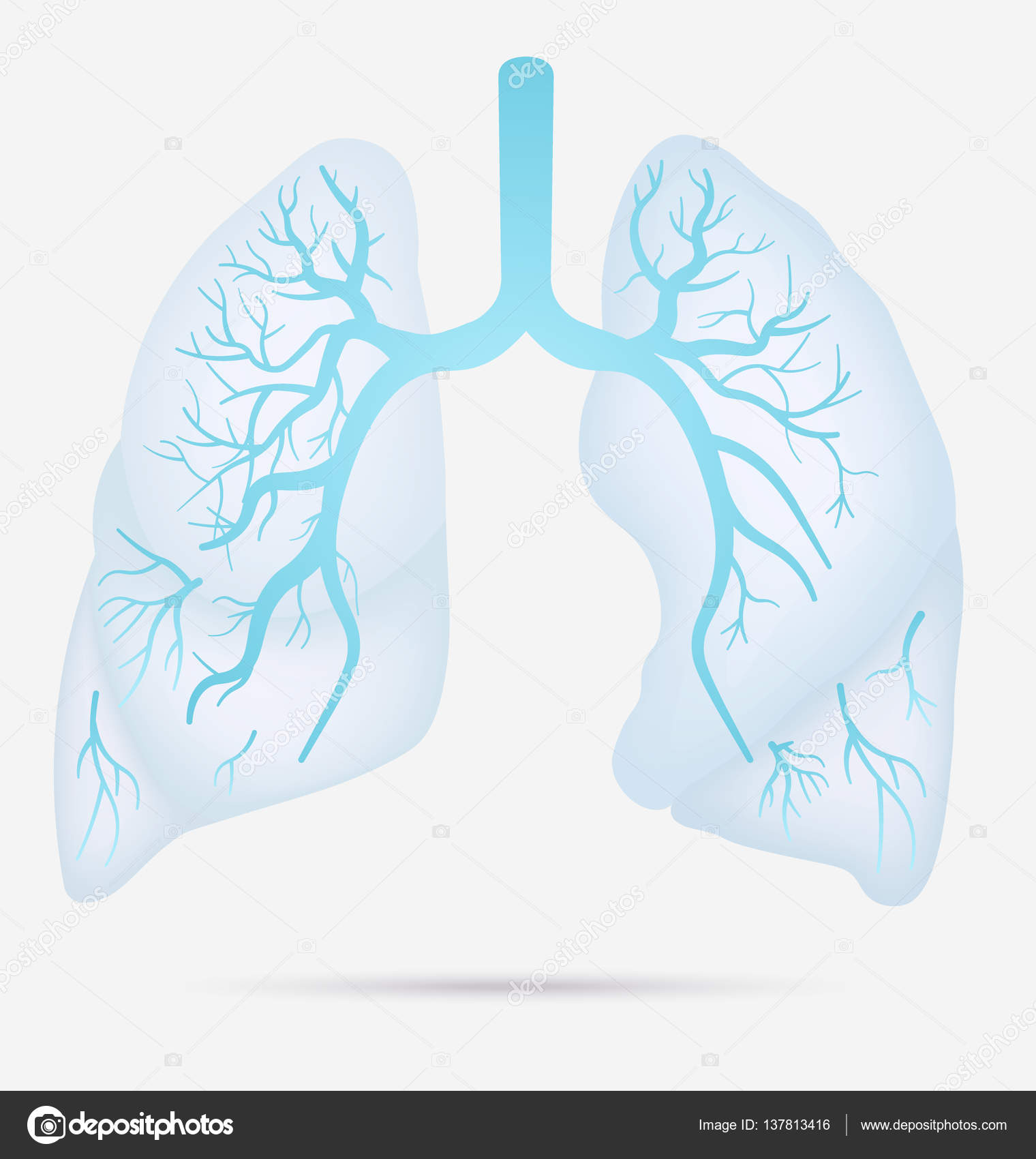 Human lungs anatomy for asthma tuberculosis pneumonia lung cancer human lungs anatomy for asthma tuberculosis pneumonia lung cancer diagram in detail illustration ccuart Images