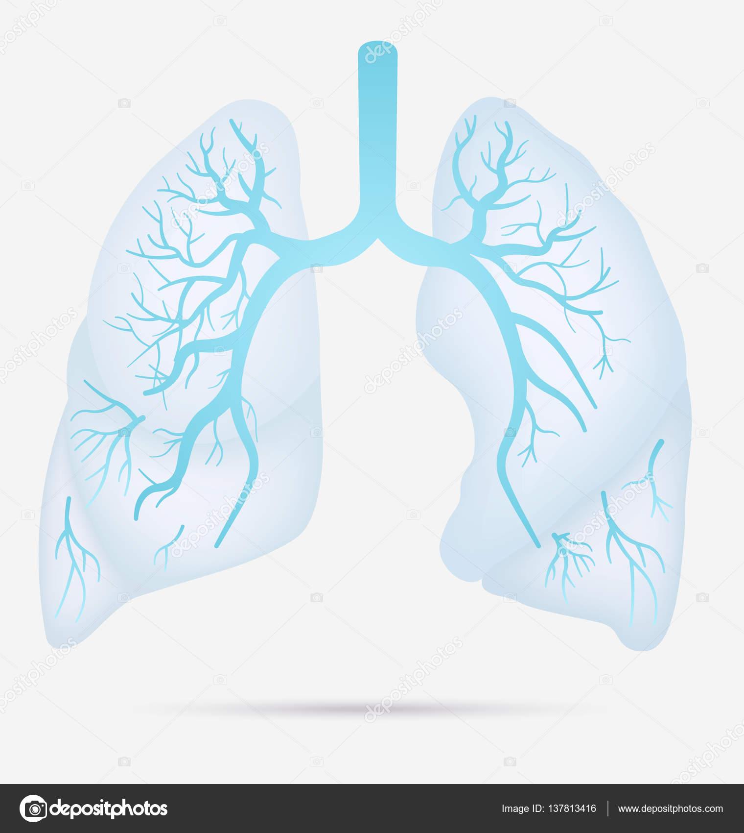 De anatomie van het menselijke longen voor astma, tuberculose ...
