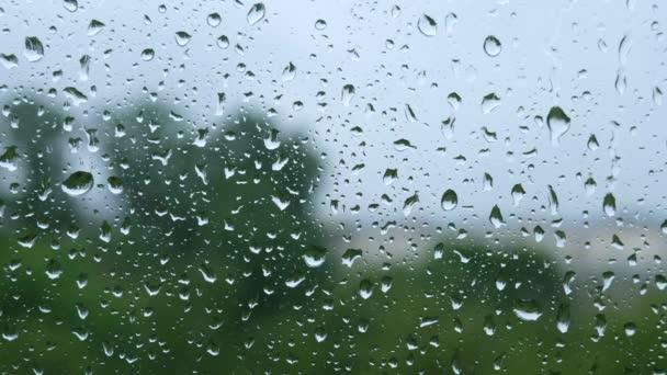 Dešťové kapky padající v okně. Šedý rozmazaný oblohu a stromy na pozadí. Jednoduchý, klidný 4k video pro webové stránky pozadí.