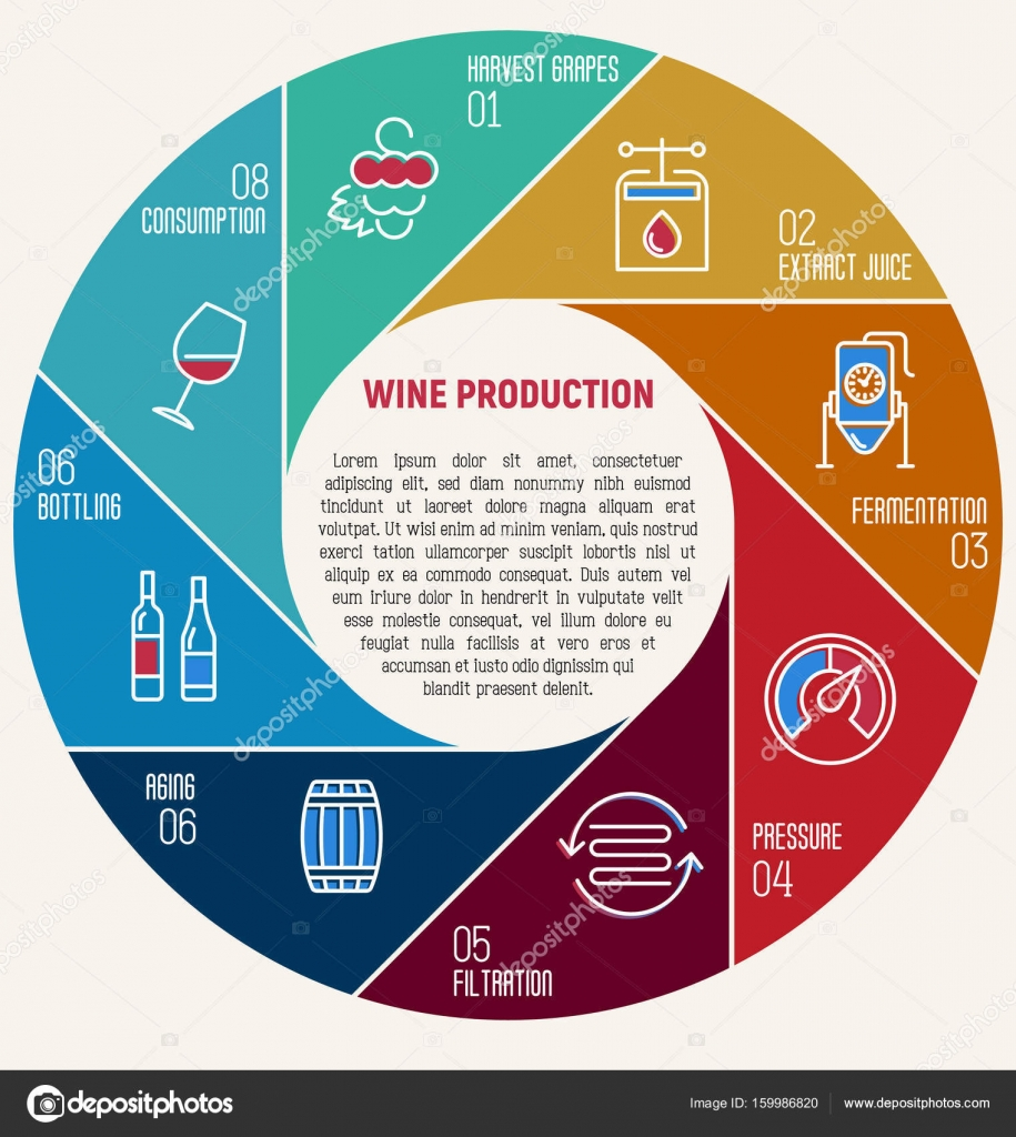 Thin line infographic of wine fermentation circle diagram with thin line infographic of wine fermentation circle diagram with eight equal parts that shows how wine ccuart Choice Image