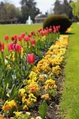 Červené tulipány v barevné záhonu