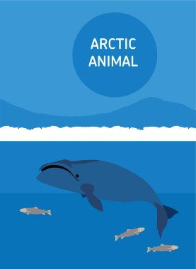 The bowhead whale. Arctic animals. Flat style illustration