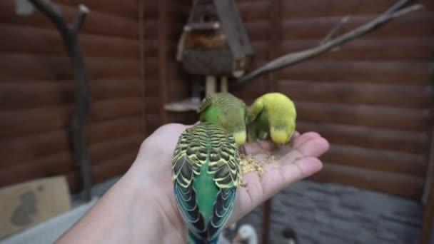 Frau füttert Papagei mit der Hand