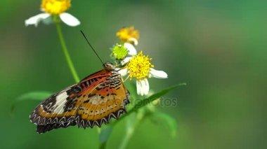 Egy pillangó a virág