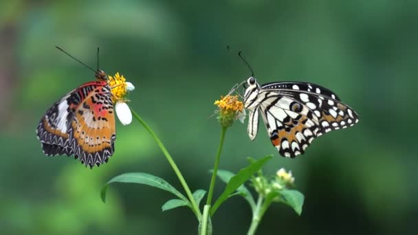 Pár motýl v zahradě