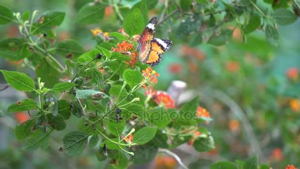 A butterfly in garden