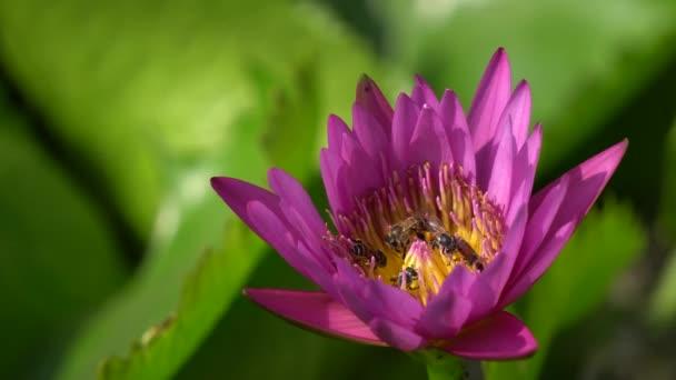 krásná květina s včela
