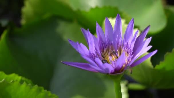 Szép virág a MEH