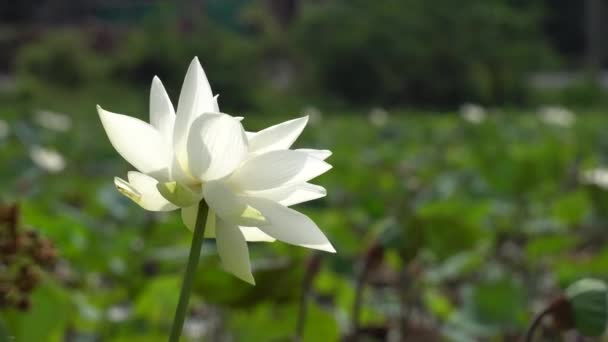 Virág mező, kora reggel