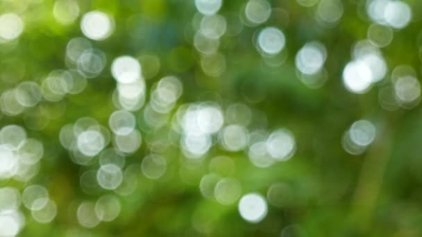 Defocused abstract nature background with green leaves and bokeh lights