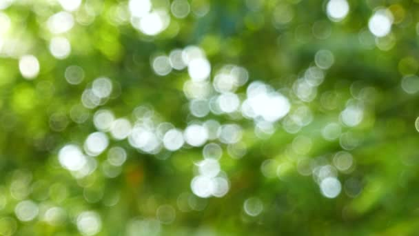 Přírodní bokeh rozostřeného pozadí z listů a strom
