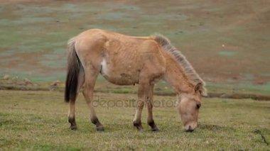 Horse in nature