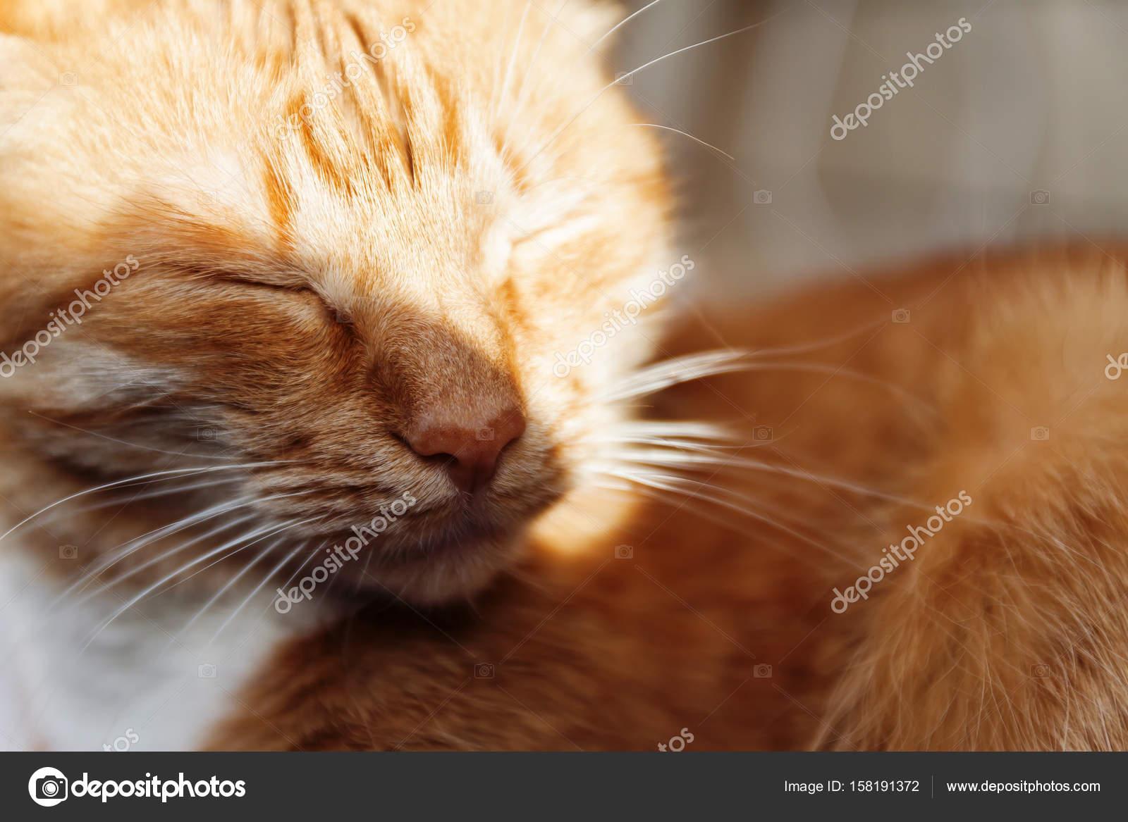 Zdarma snímky zblízka enlrged kočička obrázky.