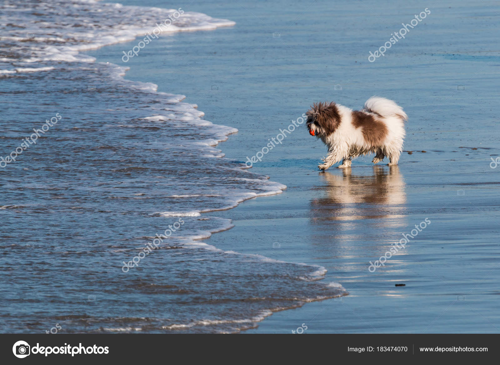 Pictures Small Long Haired Dogs Small Long Haired Dog