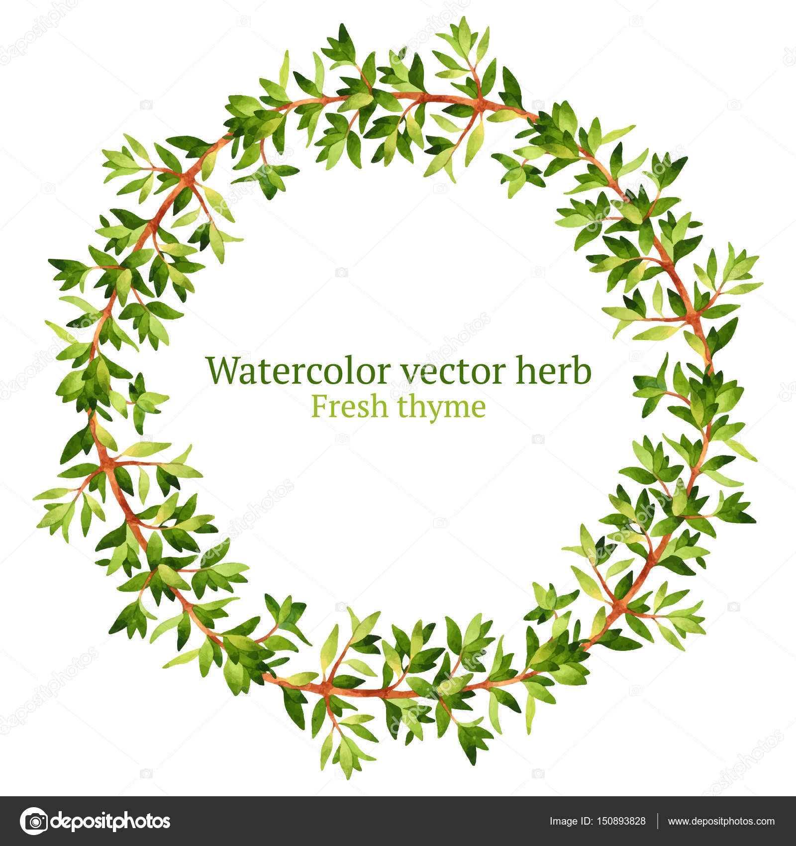 Wreath With Thyme Herb Stock Vector 169 Achtung 150893828