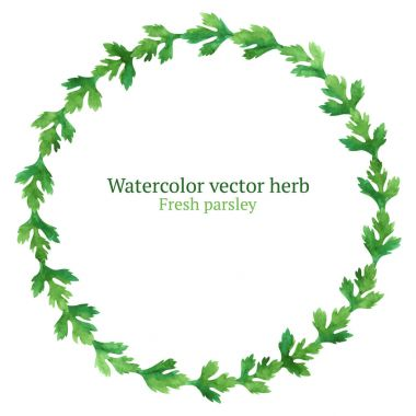 Watercolor wreath with parsley