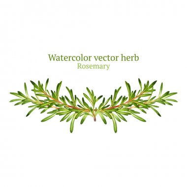 Watercolor with rosemary herb