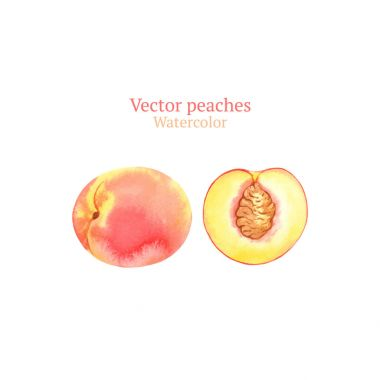 Watercolor summer peaches