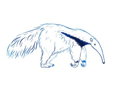 Hand drawn anteater