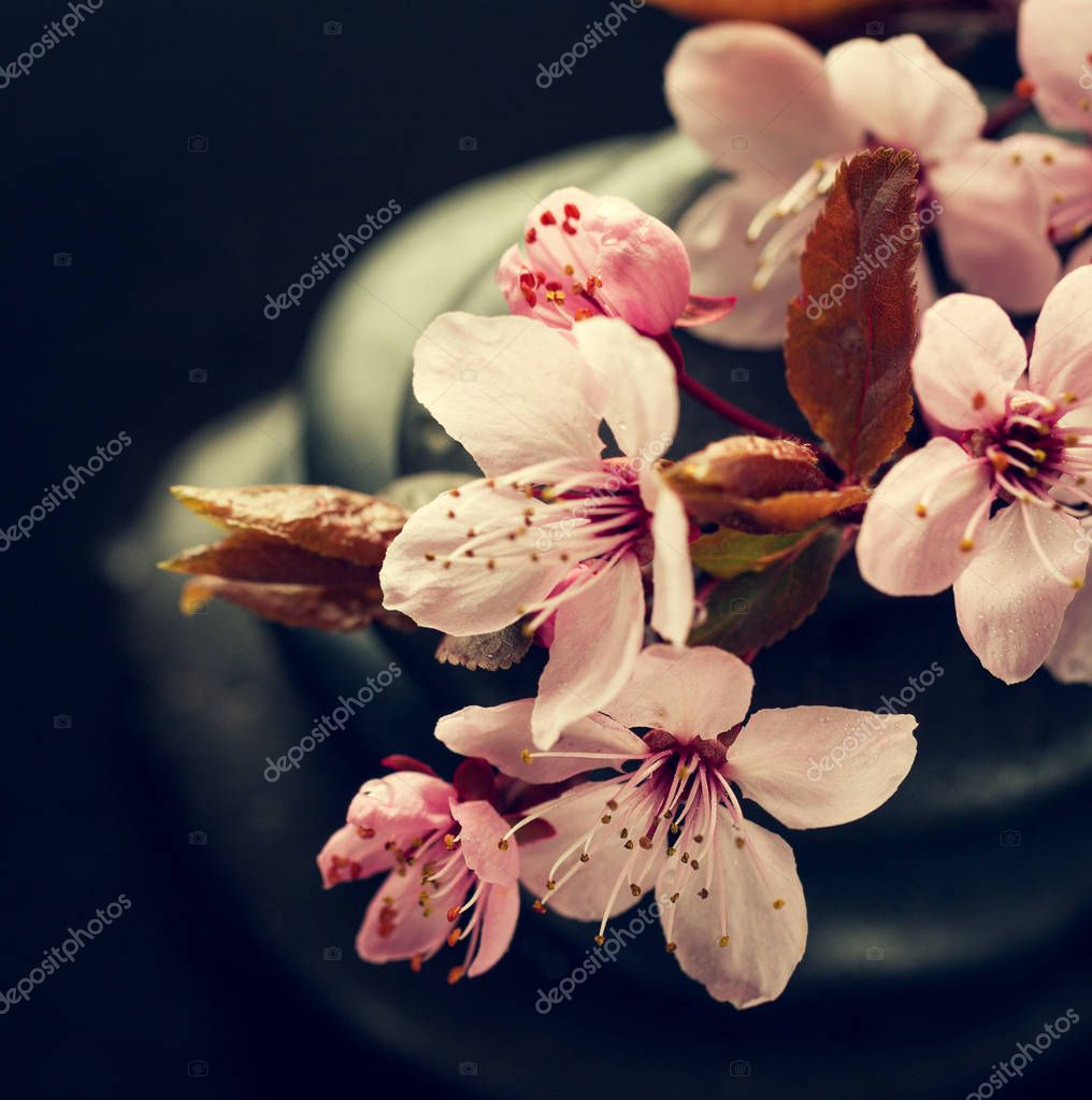 Beautiful pink Spa Flowers on Spa Hot Stones on Water Wet Background