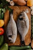 Dorado ryby na dřevěné desce s kořením a jiné zeleniny