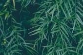 Fotografie Detailní záběr malé tropické zelené listy. Makro snímek. Letní pozadí
