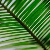Vértes lövés trópusi zöld Pálma levelek. Nyári háttér
