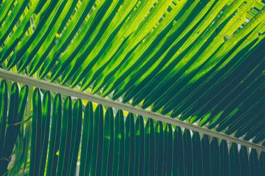 Closeup shot of tropical green leaves. Summer background