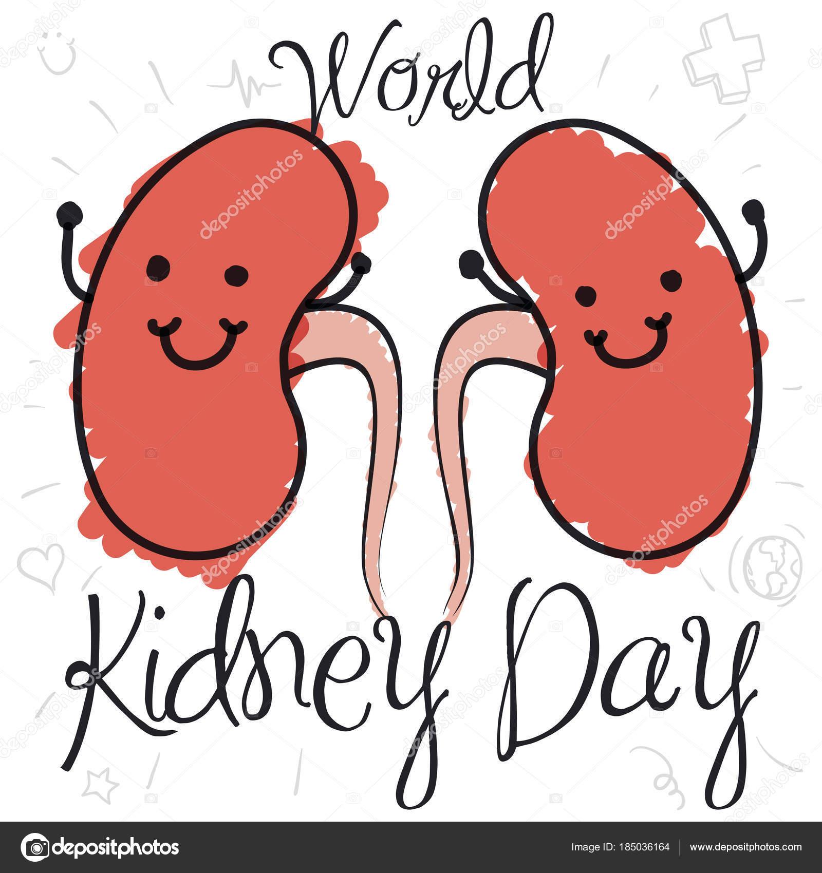 Los riñones lindos y Doodle dibujos para el día mundial del riñón ...