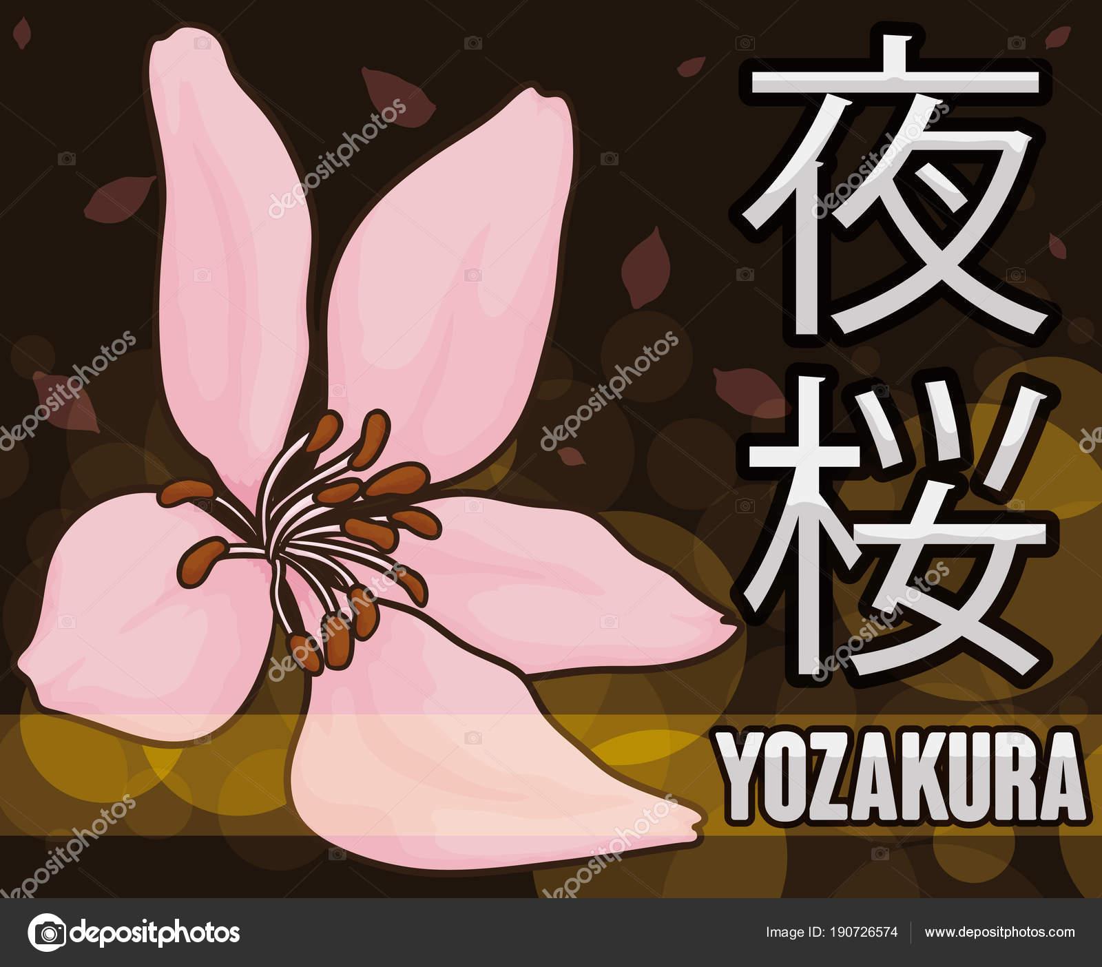 Cherry Flower In Night Celebration Of Hanami Or Yozakura Vector