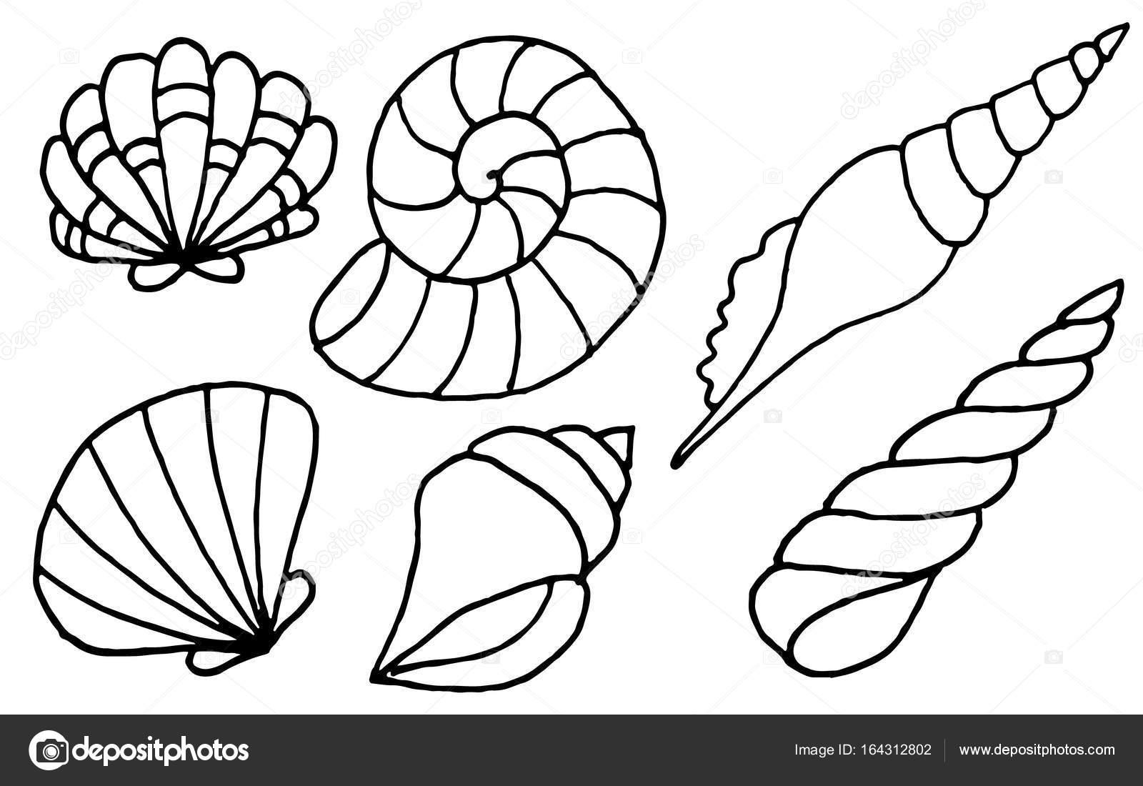 El Deniz Kabukları Koleksiyonu çekilmiş Boyama Kitapları Için Deniz