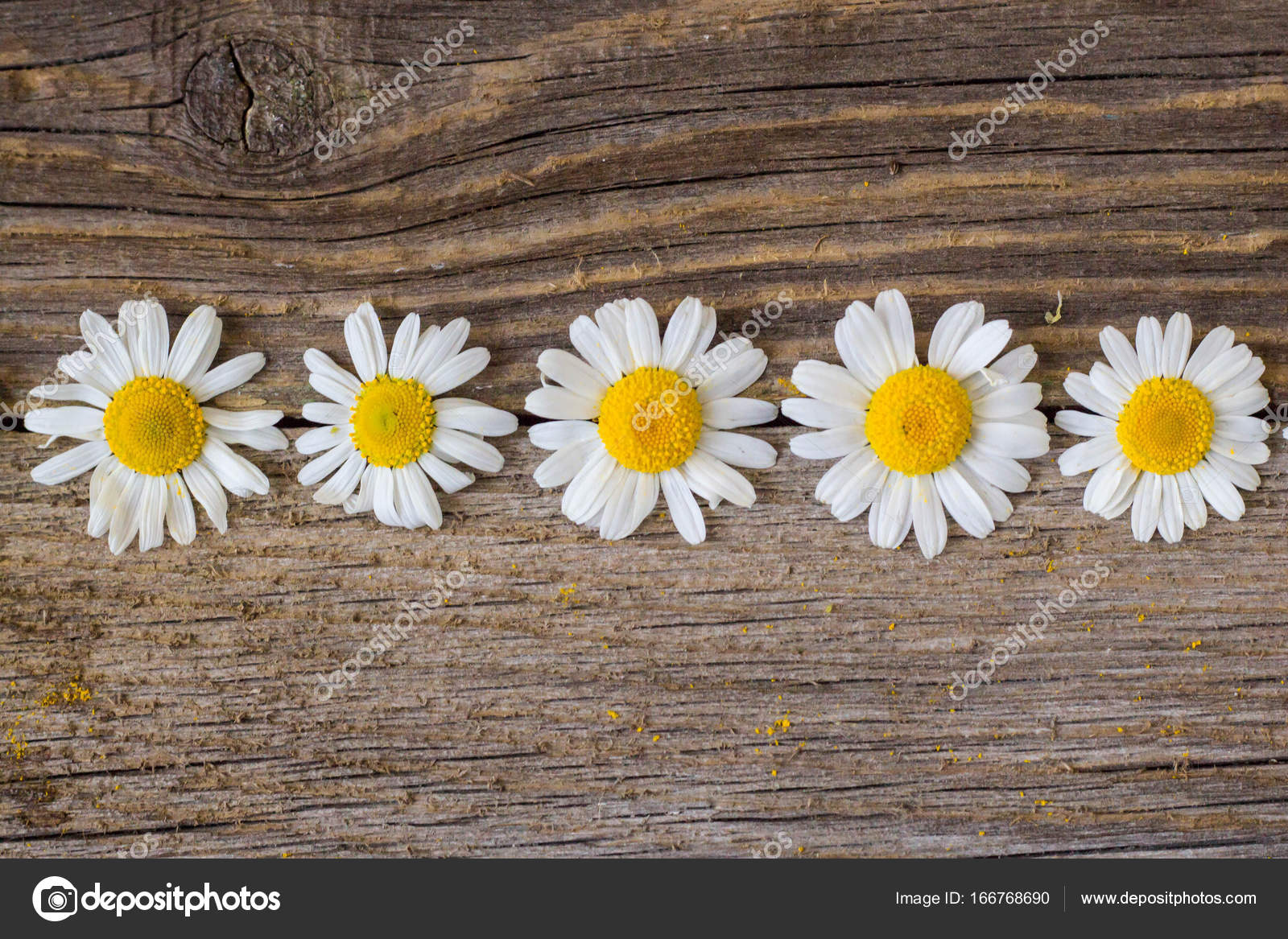 Border of daisy chamomile flowers on wooden background view with border of daisy chamomile flowers on wooden background view with copy space stock photo izmirmasajfo