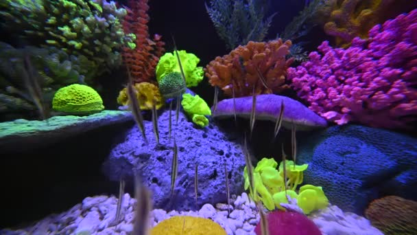 close-up footage of beautiful aquarium with fish and plants as underwater world in Asia